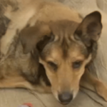 Dog beaten and dragged by a bike gets forever home detroit pit crew