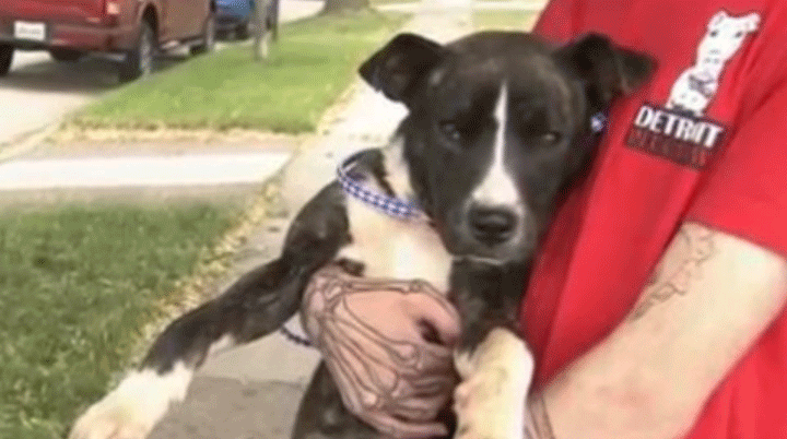 'Helen' the pup found on Detroit streets without a tongue