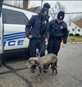 Emancipated Dog being lead to treatment